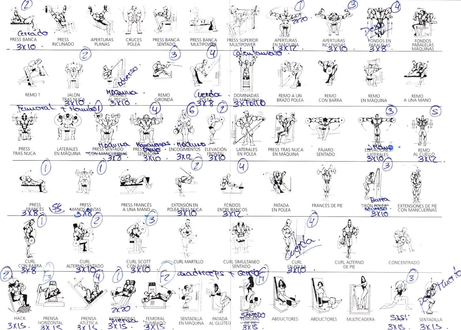 tabla ejercicios gimnasio ganar volumen