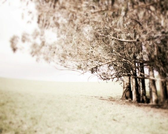 Tree Photography Pale Brown Decor Sepia Nature Wall Art Meadow Woodland Forest Pale Muted Earth Nature Wall Art Black And White Landscape Neutral Wall Art