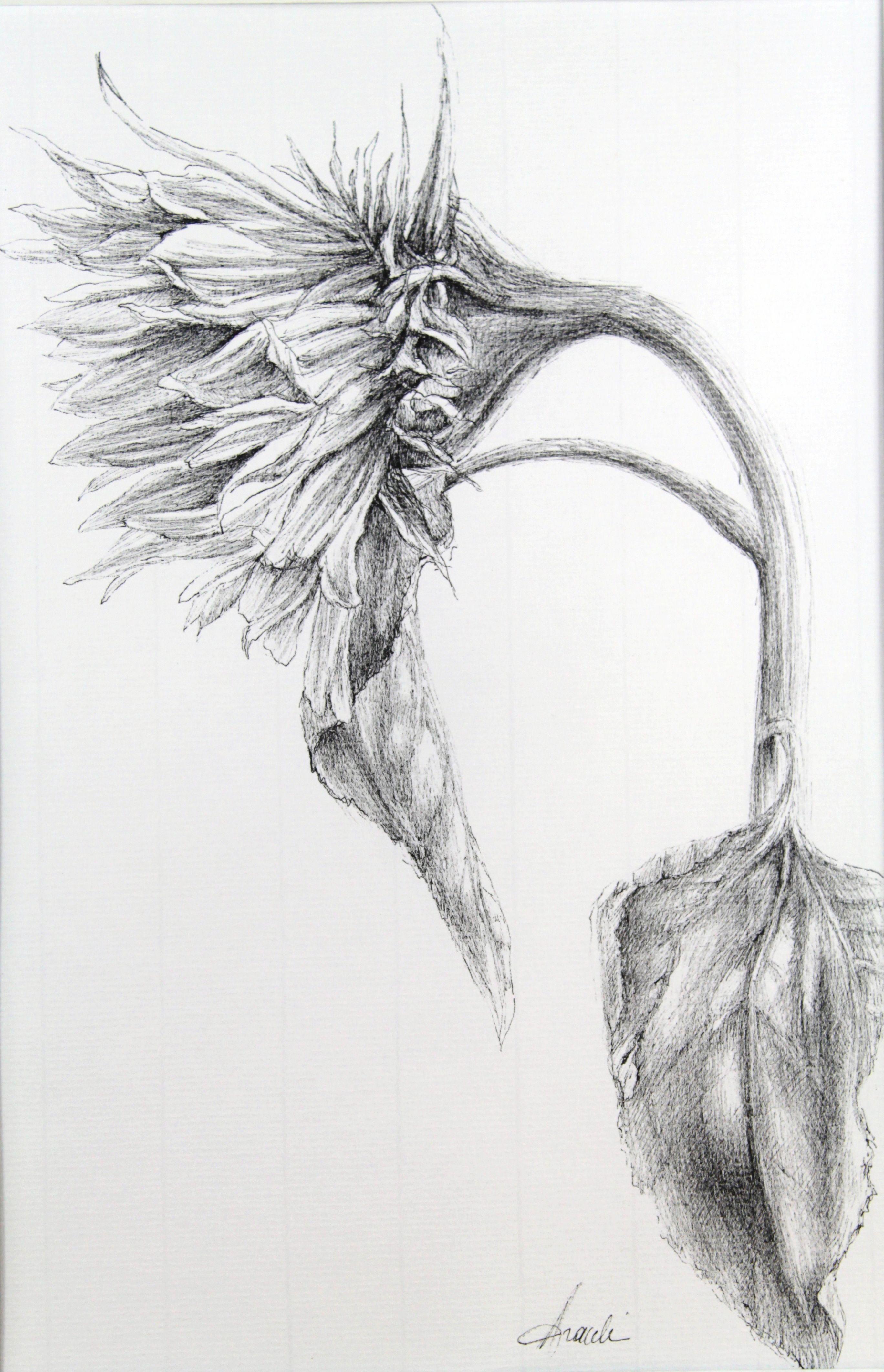 Zonnebloem pentekening creative pinterest drawings sunflowers