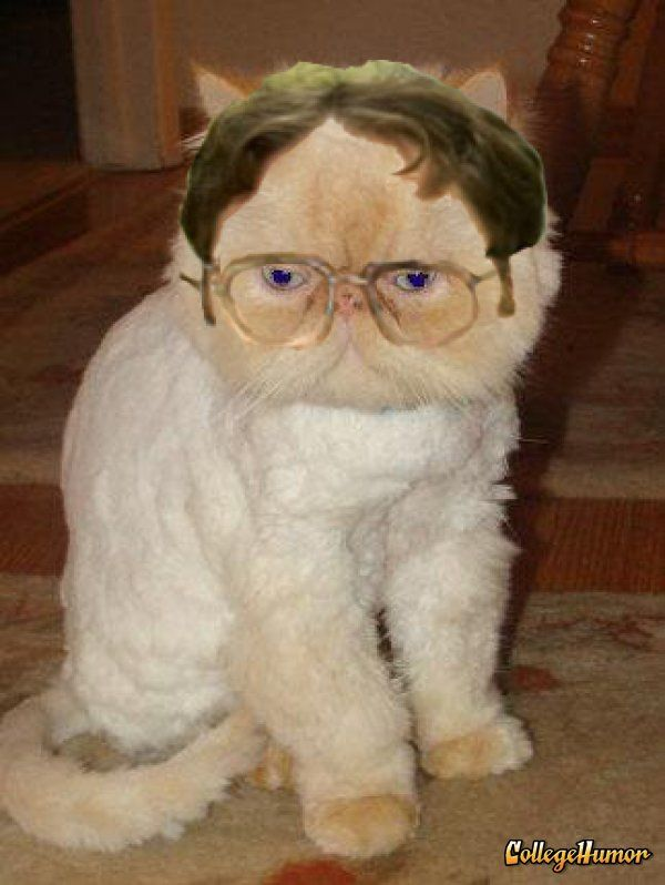 Dwight Cat STOP IM DYING WAIT I NEED A CAUSE CATS BOARD So - 18 hilarious sad cat problems that might explain why your cats so moody