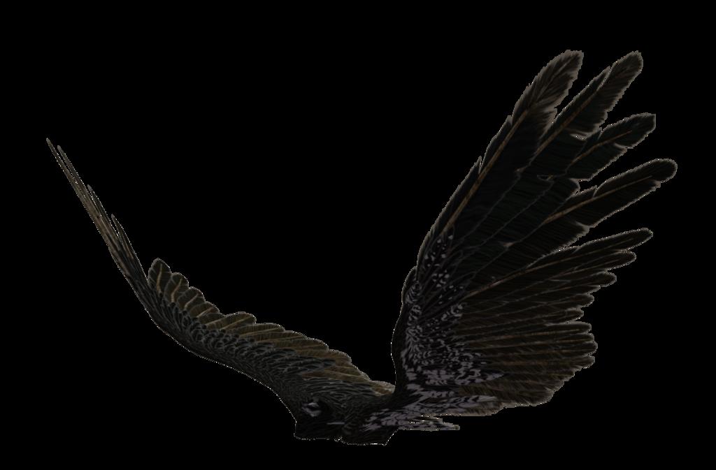 Angel Wings Stock by wolverine041269 on DeviantArt   Anatomy of ...