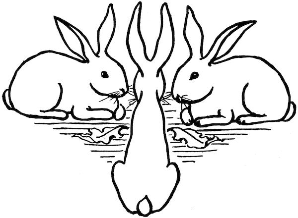 Rabbit Tte Tte