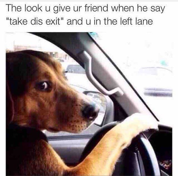 The Friend That Has No Sense Of Direction Funny Driving Quotes Dog Memes Driving Humor