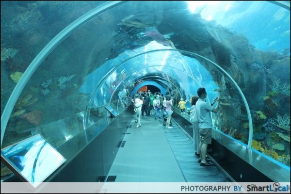 S E A Aquarium Sentosa Singapore Attractions Rws Seaaqurium