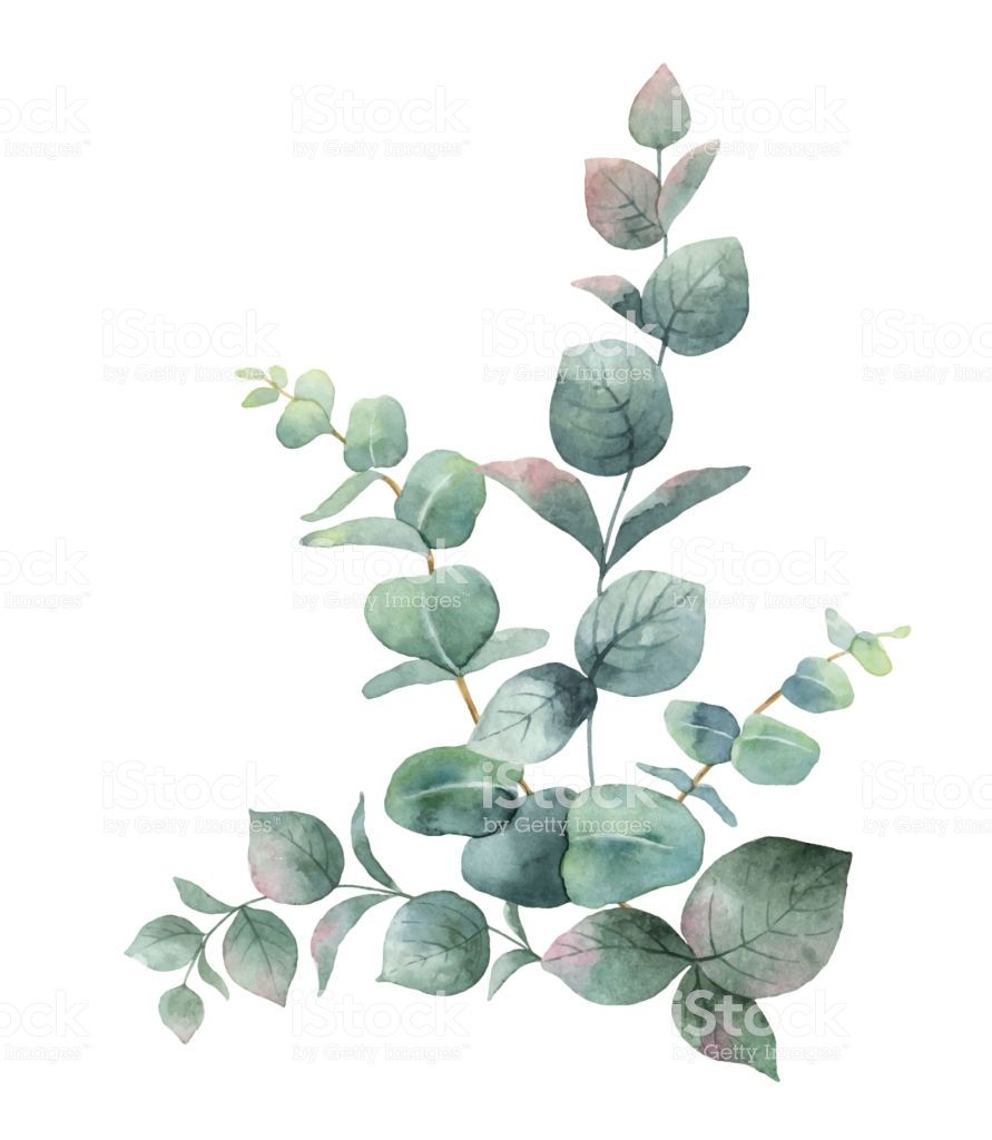 2020的watercolor Vector Bouquet With Green Eucalyptus Leaves And