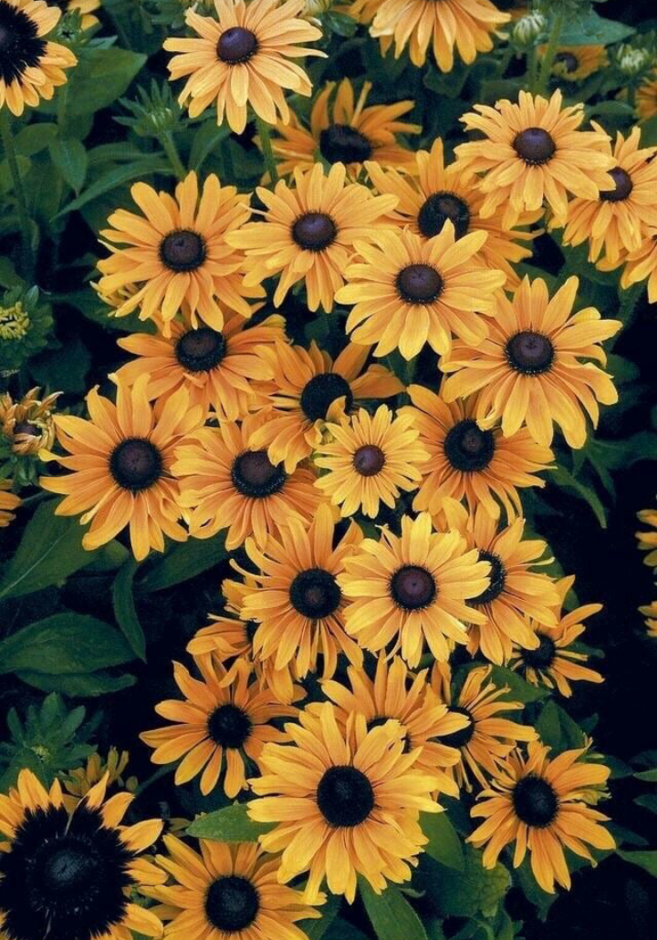 Flowers Wallpaper And Yellow Image Aesthetic Wallpapers