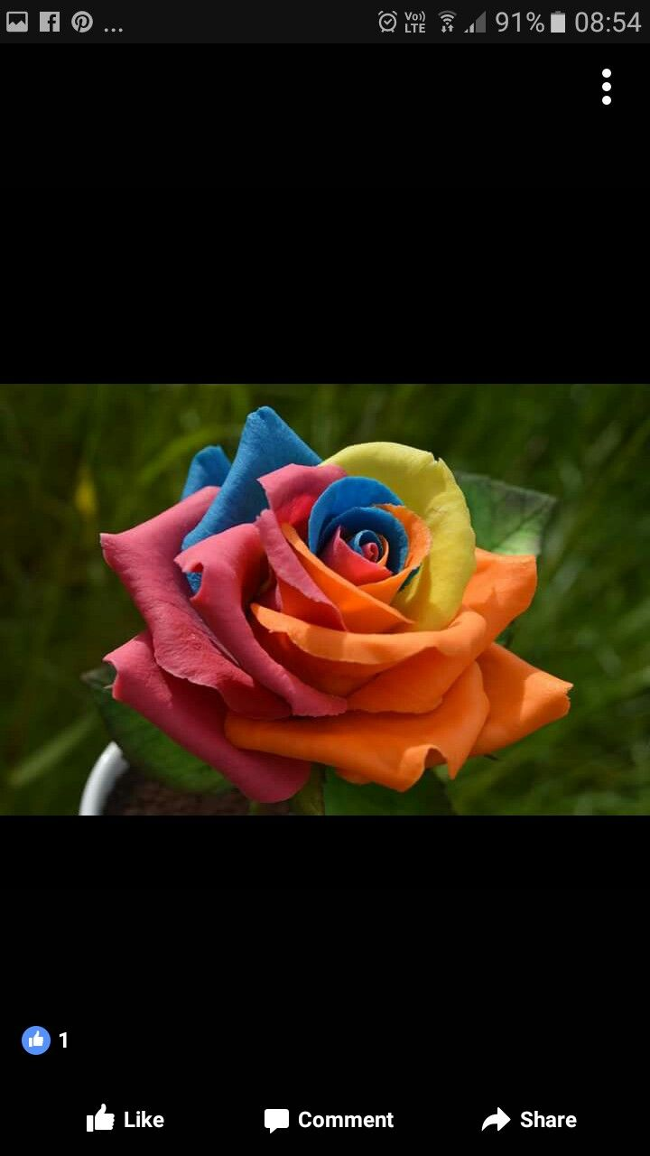 Find This Pin And More On Rainbow Roses Wedding Cake By Carolwilson737
