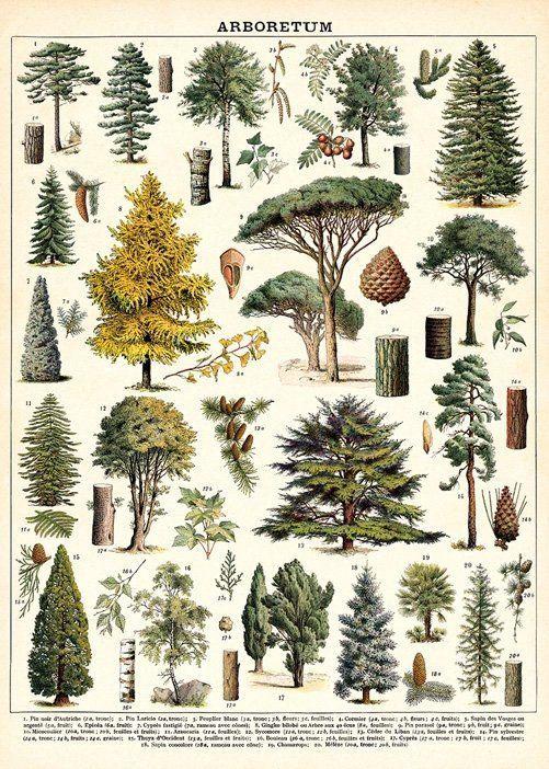 Tree Print | Tree Species Wall Art | Trees Print V