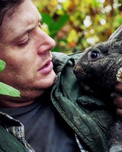 12x11 Regarding Dean  I desperately want them to have a pet bunny in