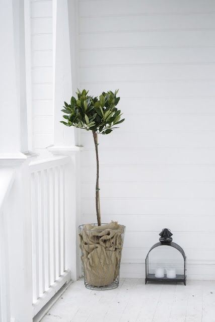 Great idea using an old farm sack to cover the plant pot