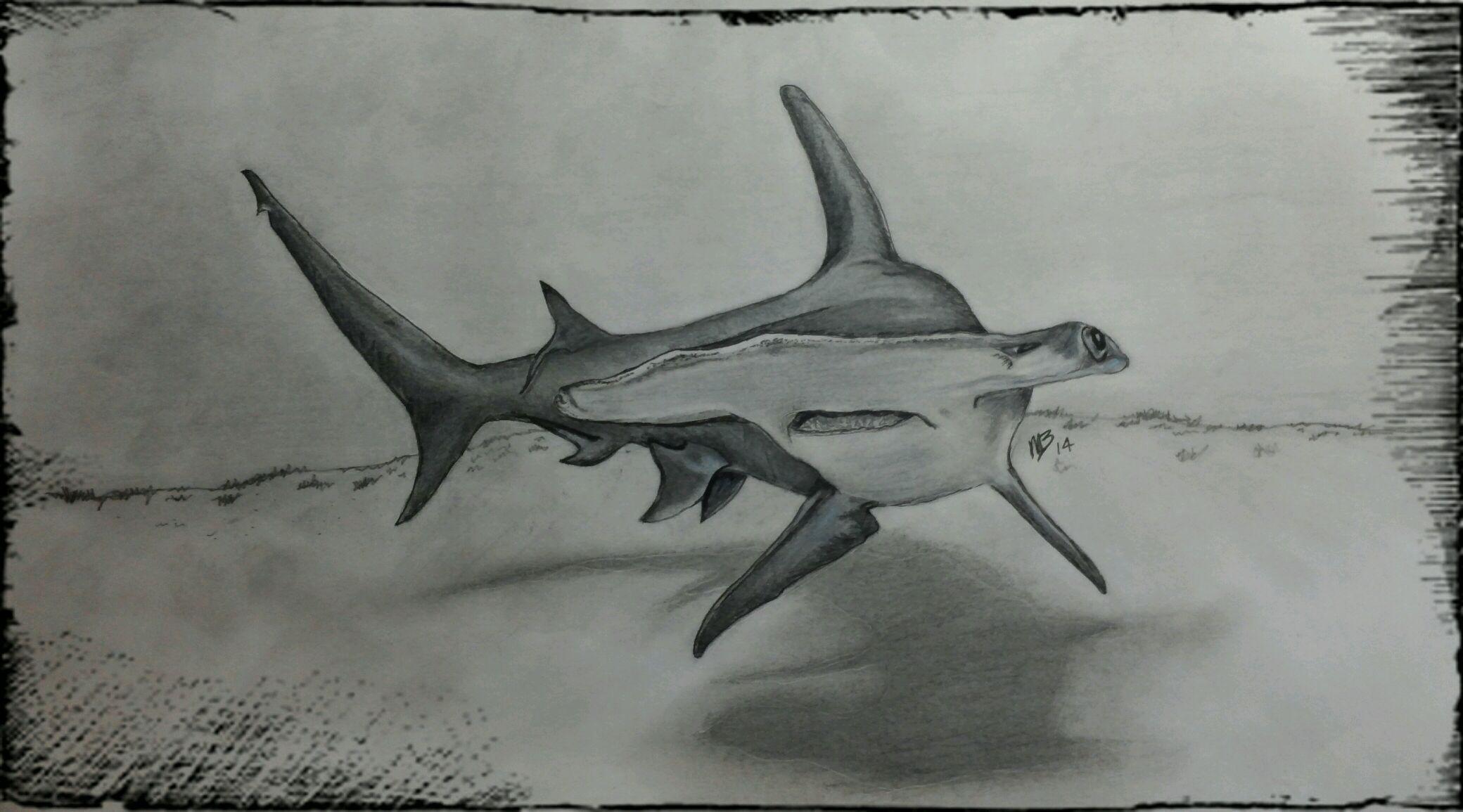 Hammerhead Shark | MY DRAWINGS | Pinterest | Dibujo de tiburón ...