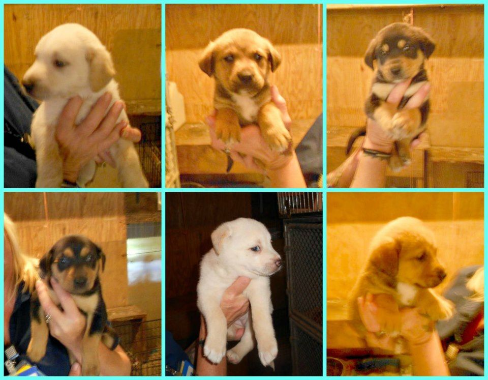 Tuscaloosa Alabama Extremely Urgent Six 7 Week Old Puppies