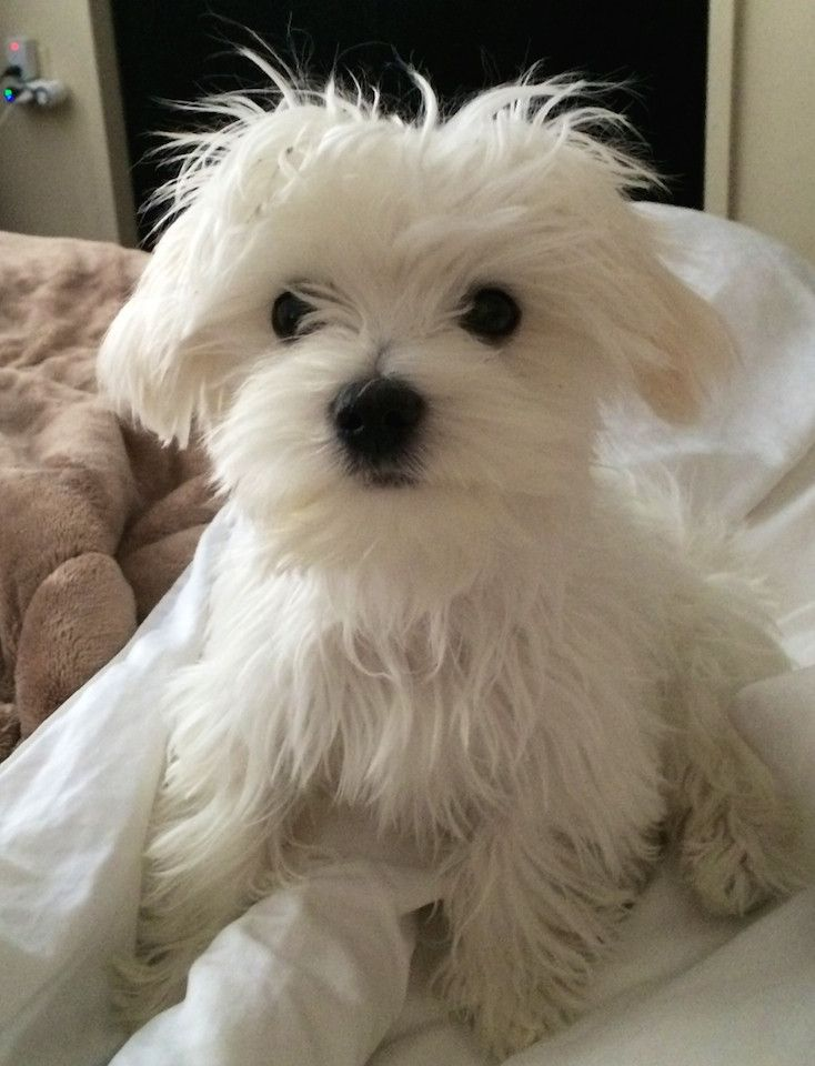 Just look at that widdle face!