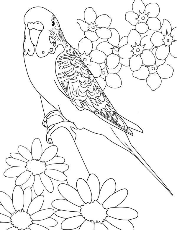 Parakeet, : Beautiful Parakeet and Flower Coloring Page