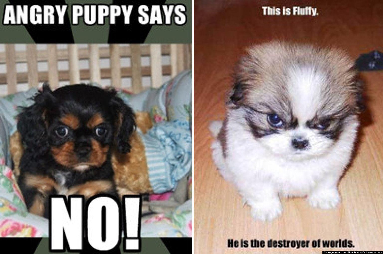 Pup Memes