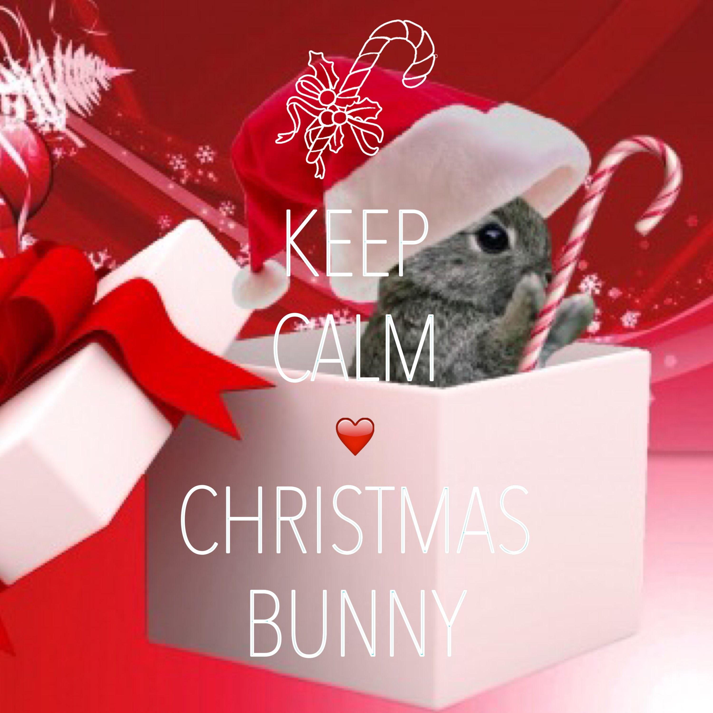 keep calm love Christmas bunny / created with Keep Calm and Carry On ...