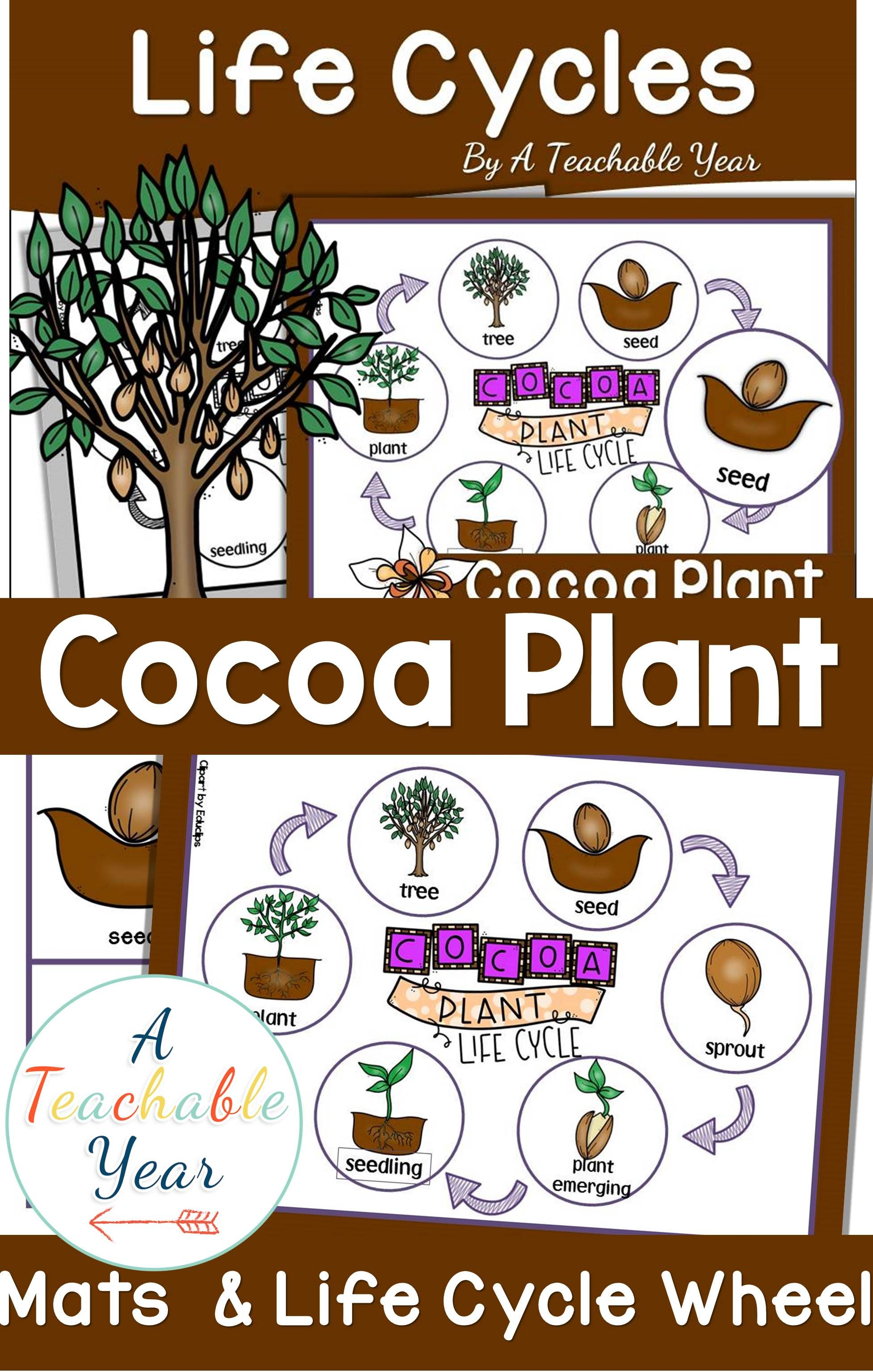 Cocoa Plant Life Cycle Pack Plant Life Cycle Cocoa Plant Plants Life Cycle Activities [ 3072 x 1954 Pixel ]