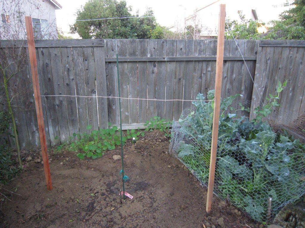 Fresh How To Build A Grape Vine Arbor | Droughtrelief.org CT81