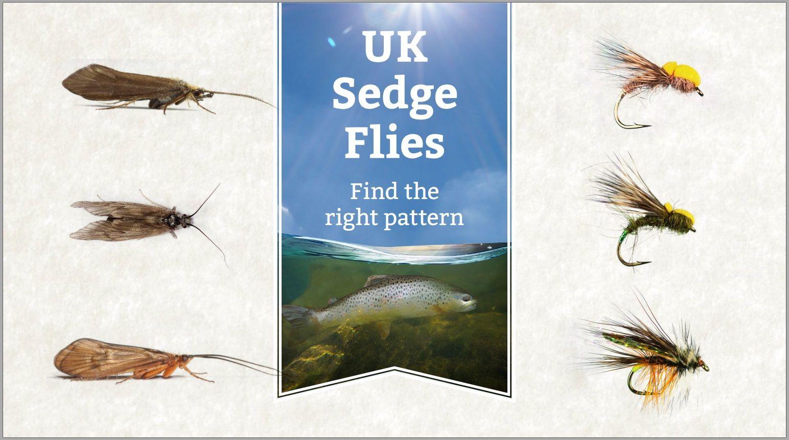 UK Sedge & Caddis fly guide match the hatch http//blog