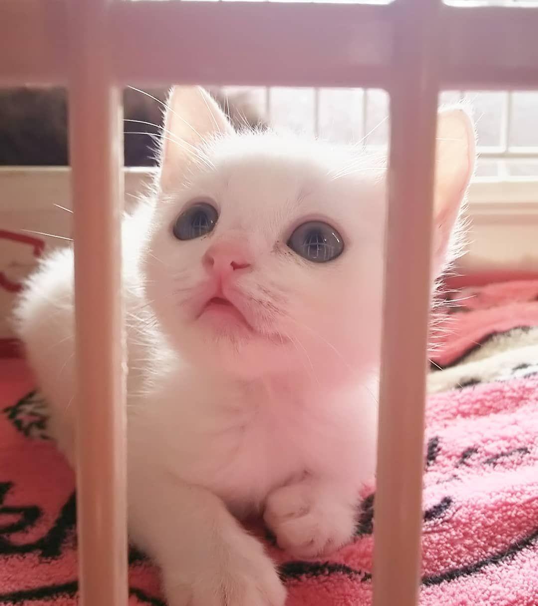 そらのしっぽ 猫守 On Instagram ナリちゃん 白猫こねこ 里親募集中 保護猫を家族に 命のバトン そらのしっぽ 姶良市加治木町ソレイユタウン近く 自宅開放型のお店 完全予約制 猫と本と優しい時間 保護猫サポーター さくらねこ 幸せ猫 幸せ Cats