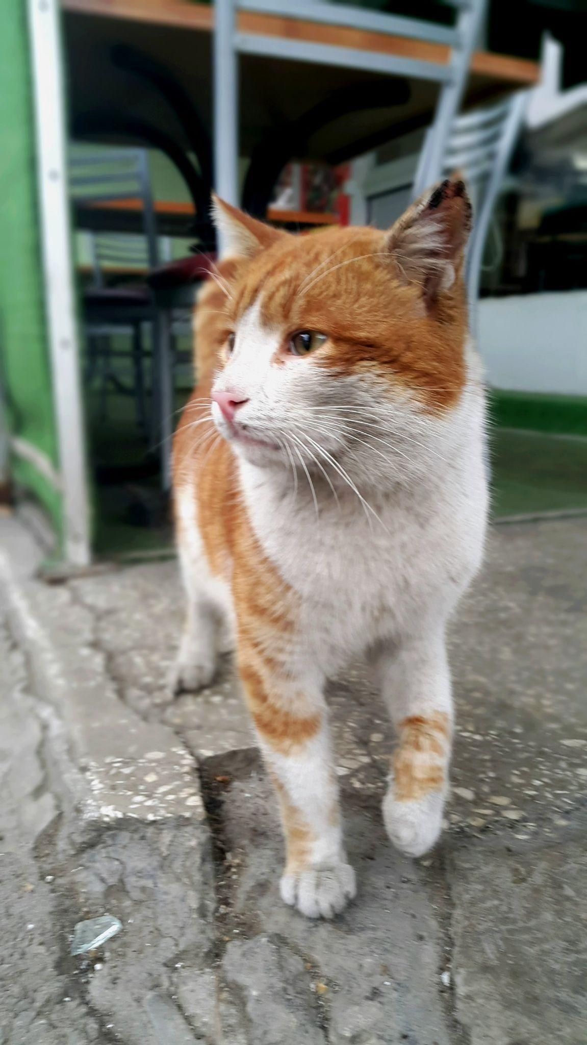 Photo cat by Ataman Aşkan on 500px