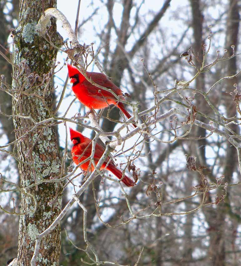 5 Backyard Bird-Feeding Basics
