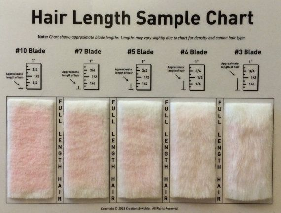 Shave Blade Sample Chart For Grooming Doggy Stuff Dog Grooming