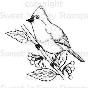 Titmouse Digital Stamp Bird Sketch Bird Coloring Pages Digital