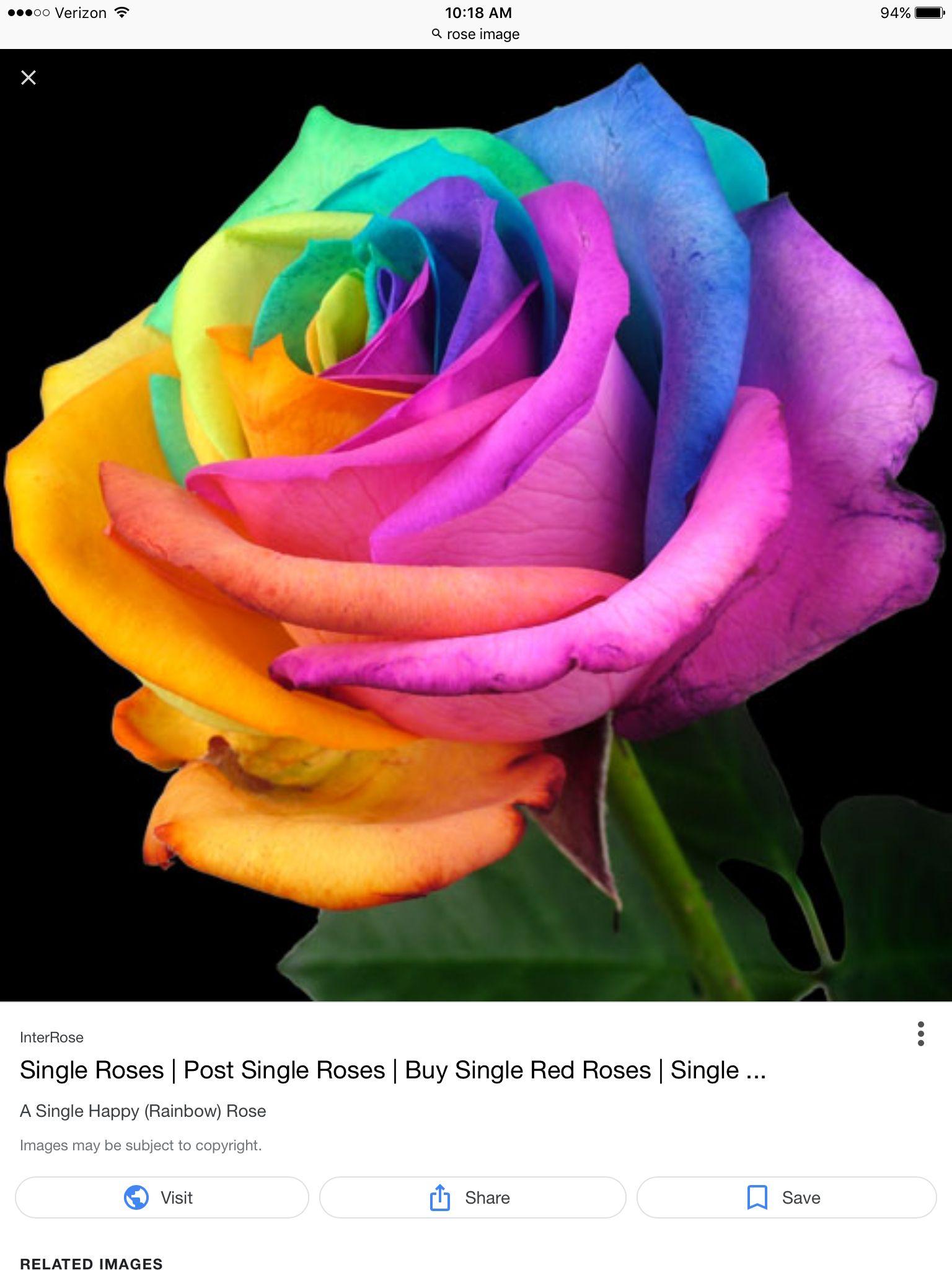 Rainbow color Rainbow roses, Beautiful rose flowers