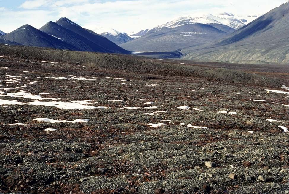 What is a tundra? The Tundra was formed 10,000 years ago. Located near the North Pole, the tundra is a vast and treeless land which covers about 20% of the Earth's surface. It is usually very...