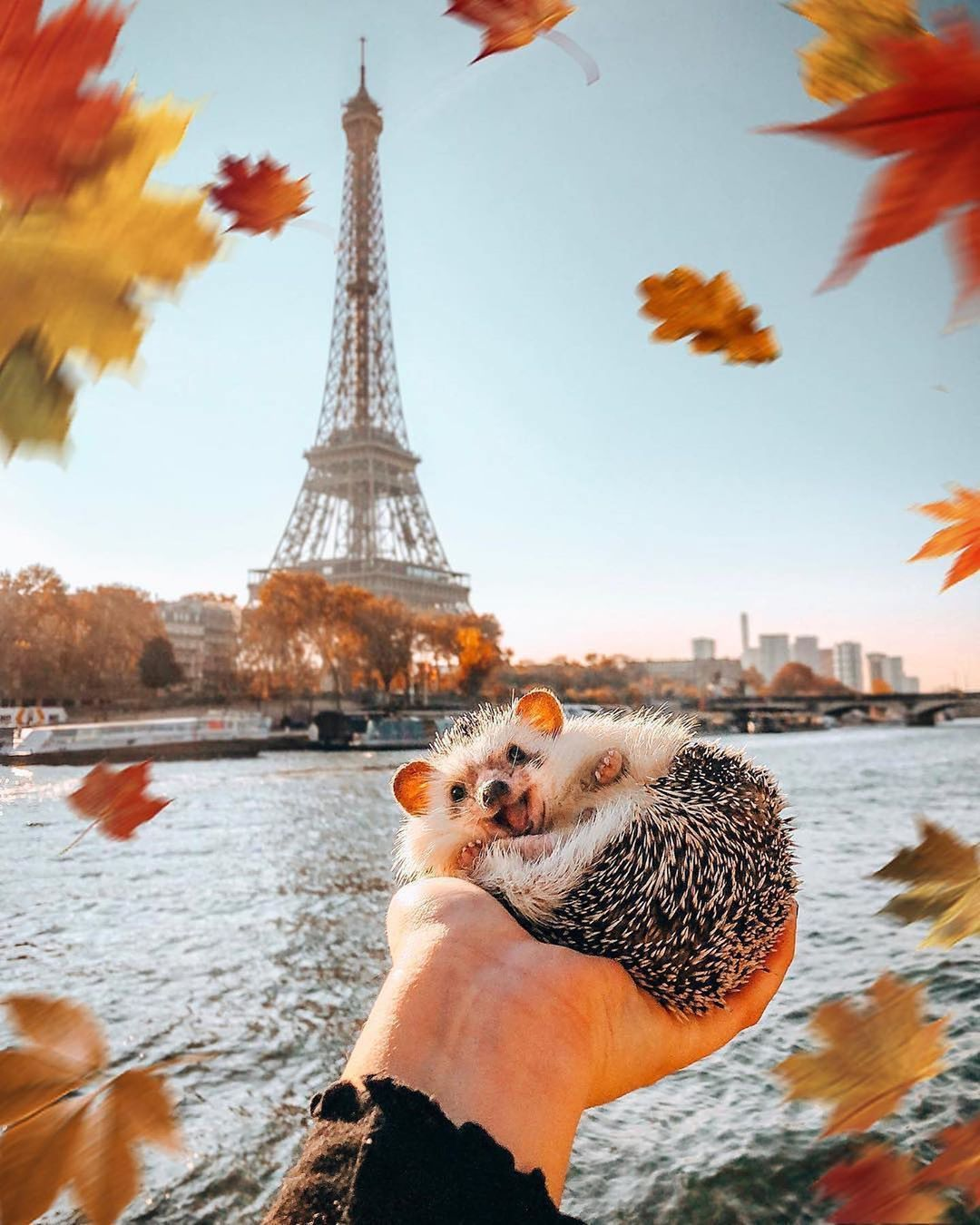 The Adventures Of A Hedgehog This Autumn Tag A Nature Lover Mr Pokee Nature Hedgehog Cute Love Hedgeh Cute Animals Cute Little Animals Animals