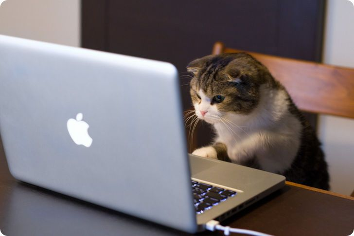 Working Cat Chat Chaton Mignon Photo Drole Animaux