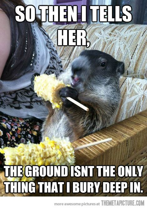6e432ca90ab1825b5bb9313a2ef1b5e6 groundhogs pull all the chicks funny pictures, funny stuff and,Funny Groundhog Meme