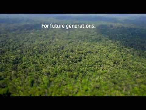 Life On Amazon River Youtube Amazon Rainforest Rainforest