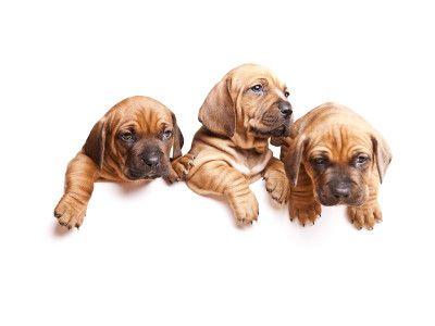 Pups At Mr Dog Pet Shop Jaipur Sobaki