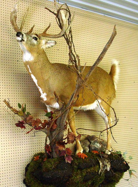 Wall Mount Deer Decor Taxidermy Deer Mounts