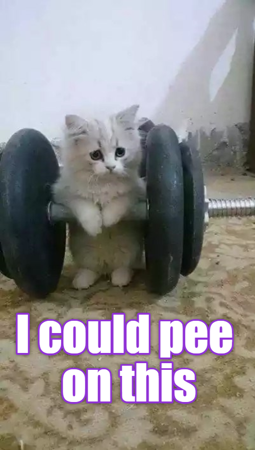 The Benefits of Weight Training Cute cat costumes, Baby