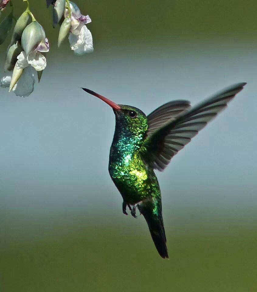 Nature Birds, Animals, Nature