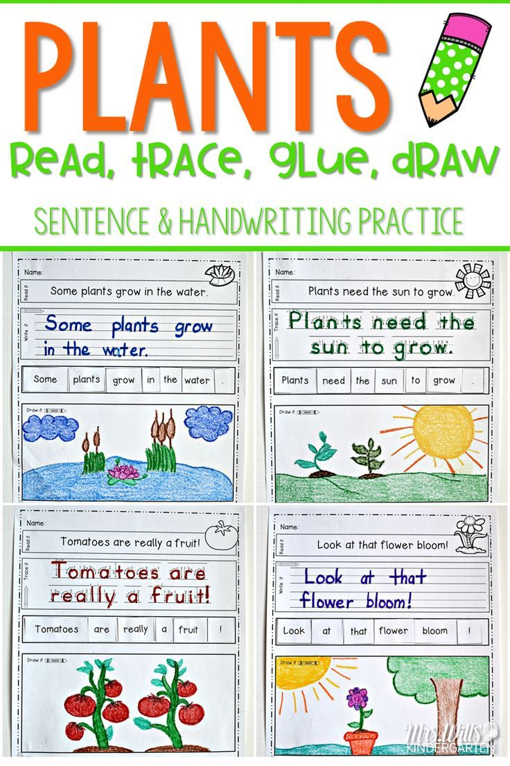Plants Read Trace Glue And Draw Kindergarten Writing Plant Lessons Kids Learning Activities [ 1104 x 736 Pixel ]