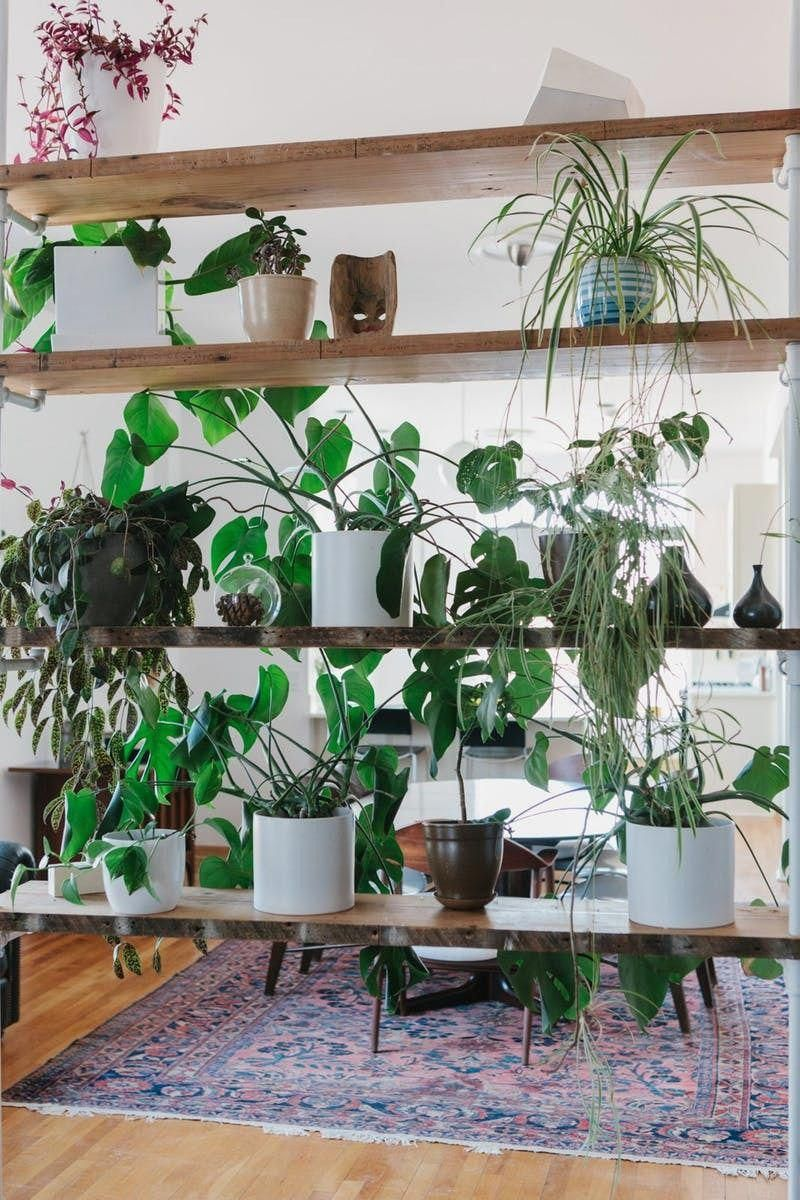 Indoors Or Out Tips For Creating A Vertical Garden Apartment Therapy Houseplants