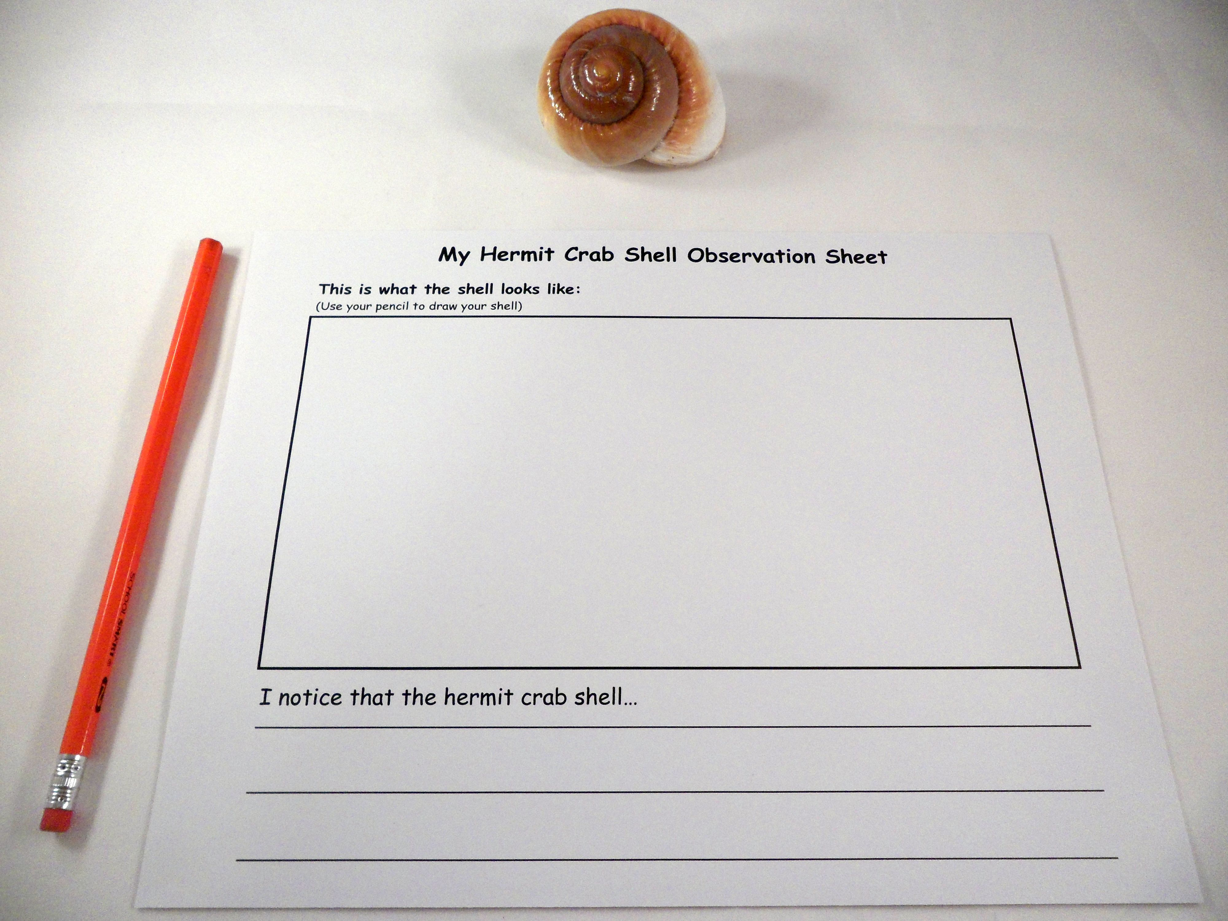 Hermit Crab Shell Observation Sheet | A House for Hermit Crab by ...