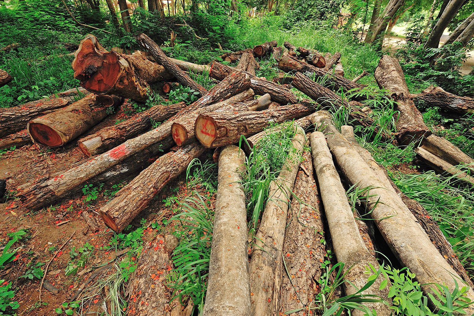 essay on deforestation in pakistan Primary Sidebar