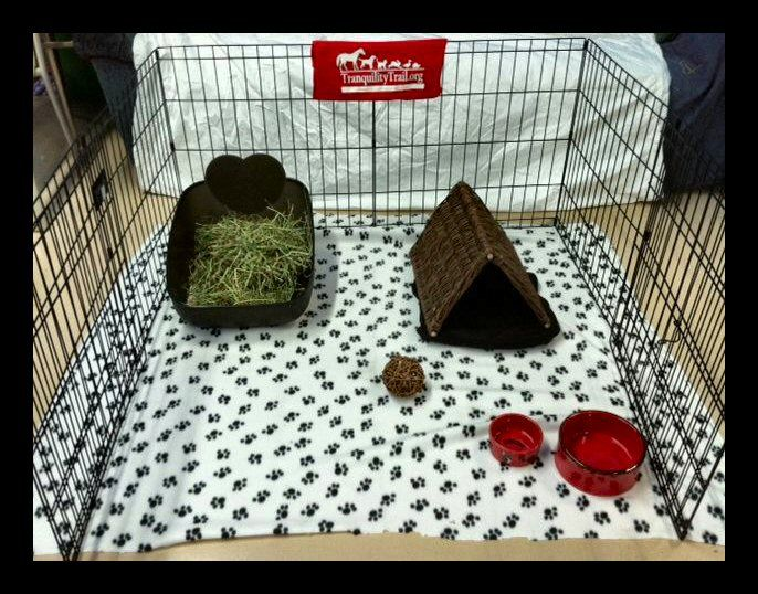 Your bunny's home should include the following: Food Bowl, Water Bowl, Hay, Litter Box, Toys, something for them to hide/rest in like a bunn...