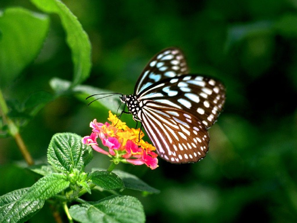 6 Different Types Of Butterflies Types Of Butterflies Beautiful Butterflies Butterfly Wallpaper