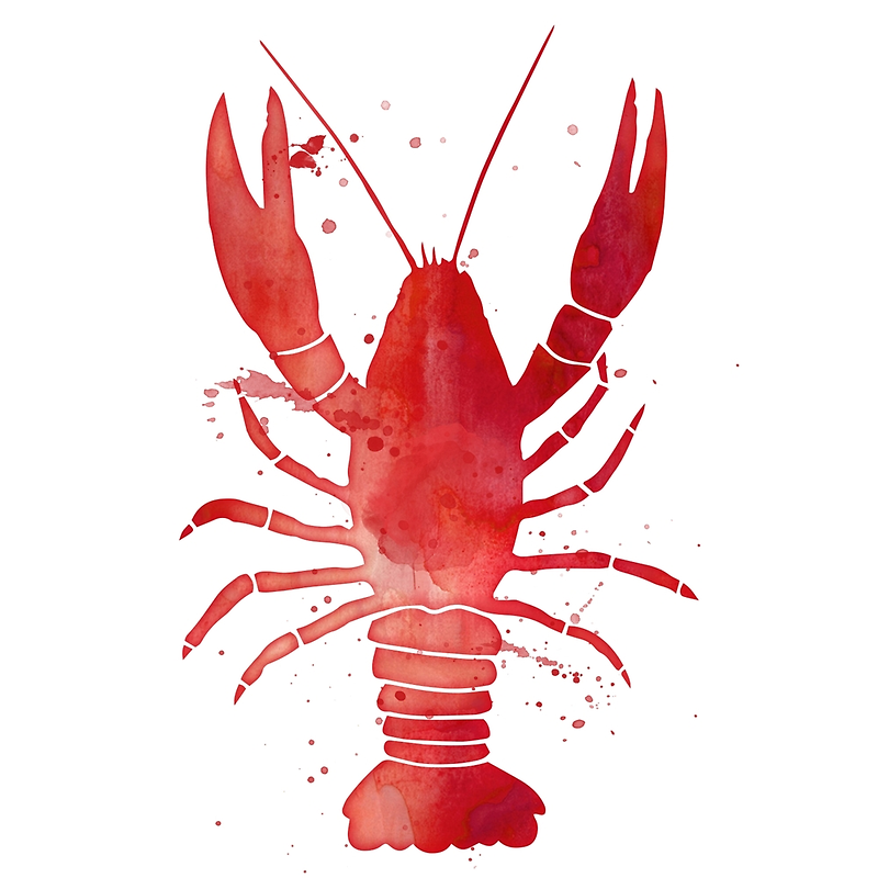 Watercolor red lobster sticker by junkydotcom april 5