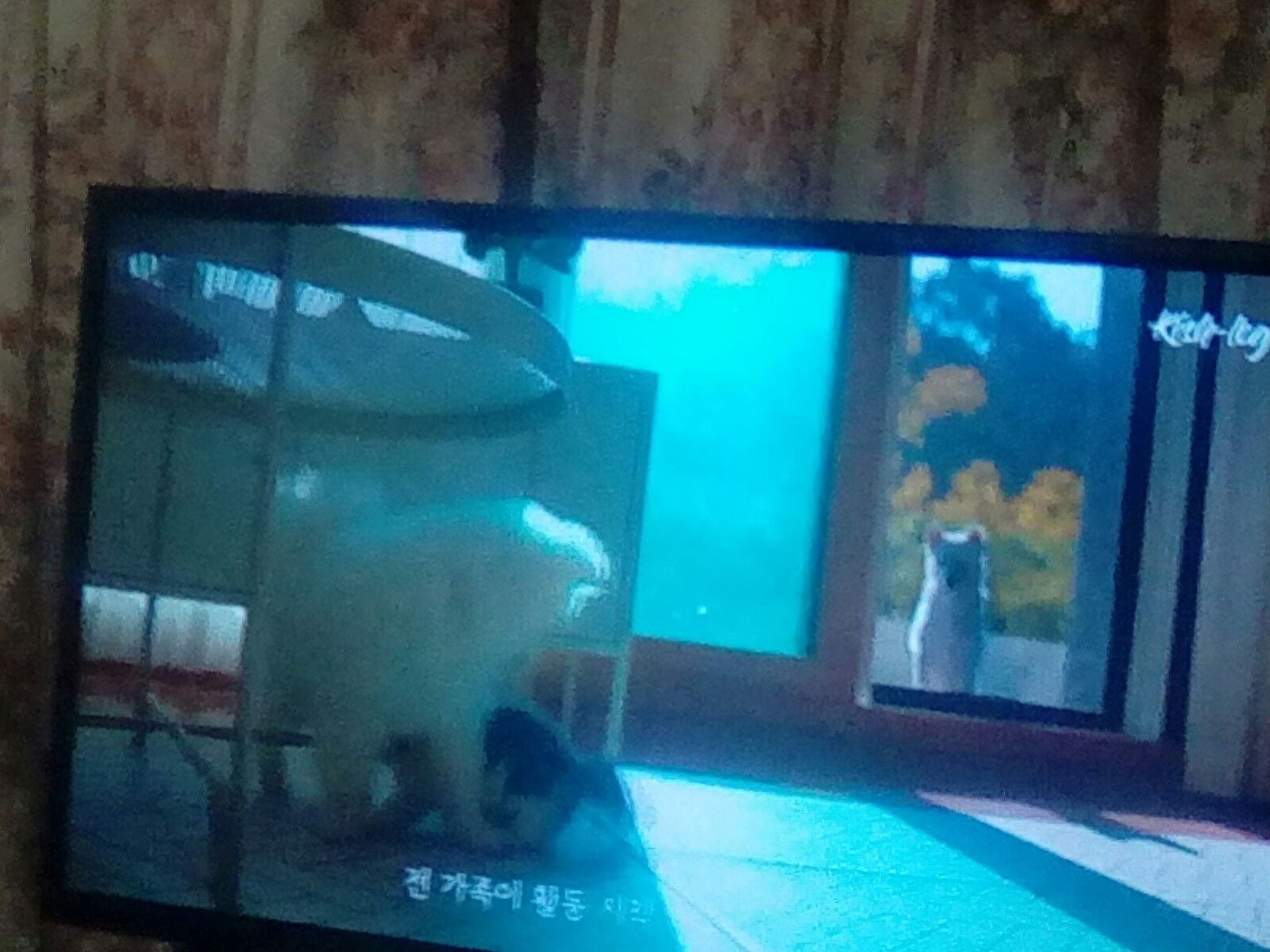 Pin By Dianahollcraft On Kitten Puppy Getting To Know Each Other Kitten Puppies Flatscreen Tv