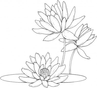 Water Lily Coloring Page Use For Stained Glass Painting