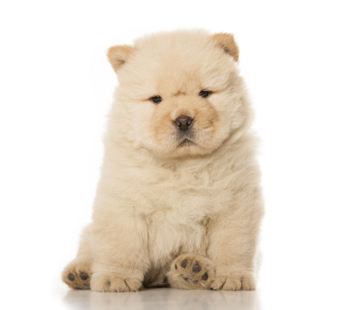 5 Reasons No One Should Ever Own A Puppy Puppies Cute Animals
