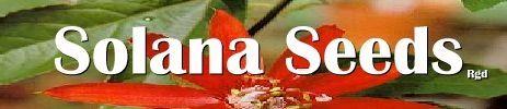 Welcome  Solana Seeds