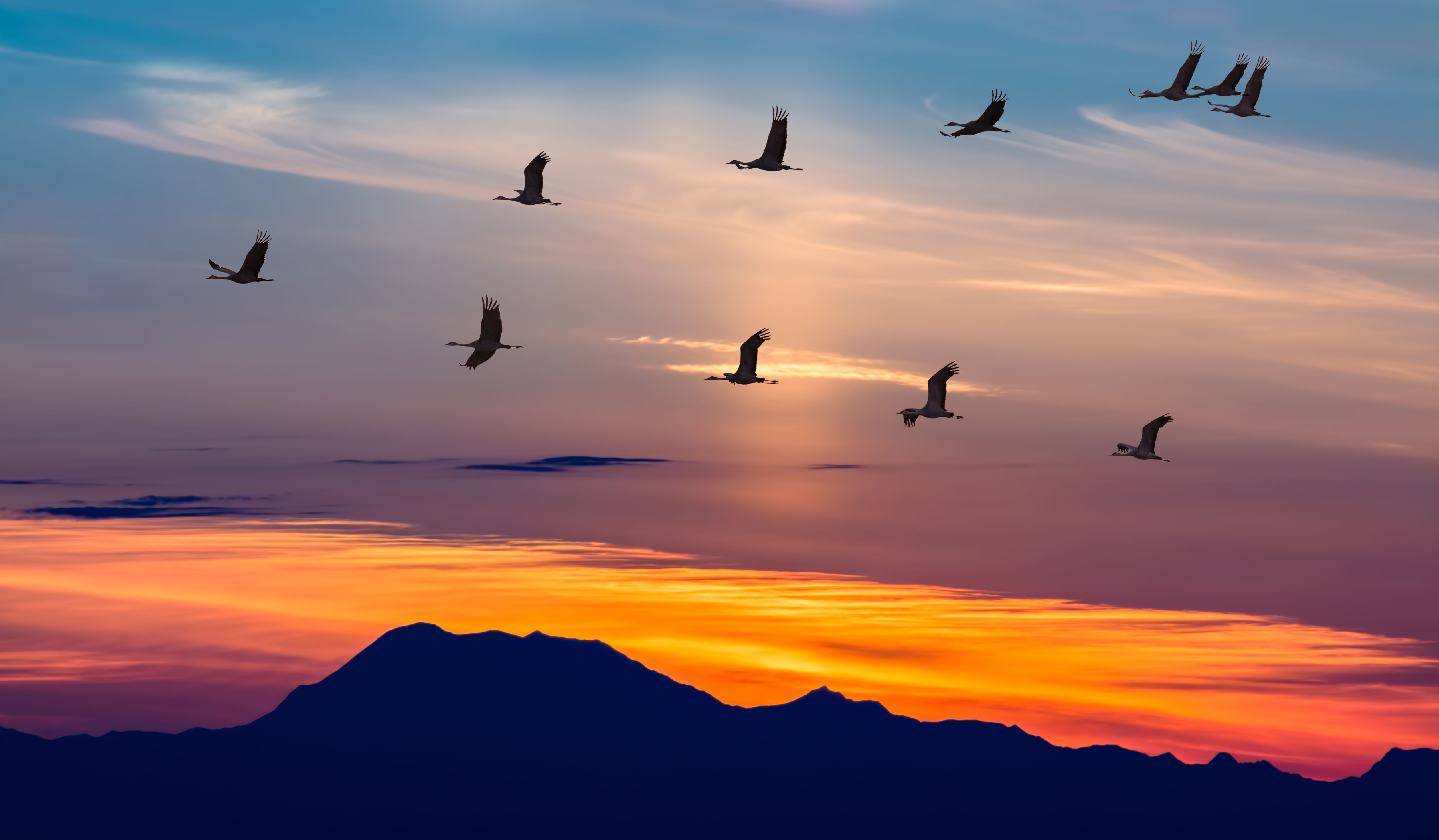 And Off They Go You Can Migrate South Too With The Help Of Barton S Limo Service We Make Getting To The Airport And Migratory Birds Birds Flying Why Do Birds